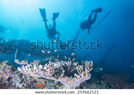 Silhouette of Scuba Divers in tropical coral reef. - stock photo