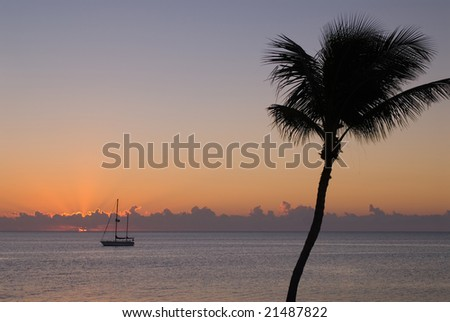 Silhouette of single palm tree in front of sunset - stock photo