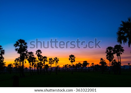 Silhouette of Sugar Palm in Twilight sky.