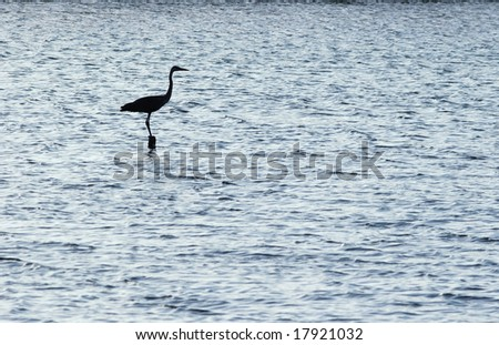 Silhouette of the egret of that standing in the river.