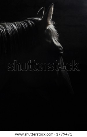 Silhouette of the Horse