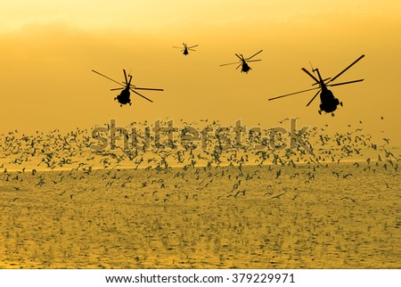 Silhouette of the military helicopter  moving into sky at sunset and beautiful seagull in the bright sky  - stock photo