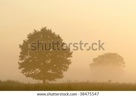 Silhouette of the tree on the misty field at sunrise. Photo taken in October. - stock photo