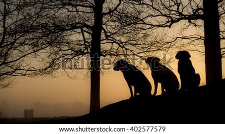 silhouette of three labradors - stock photo