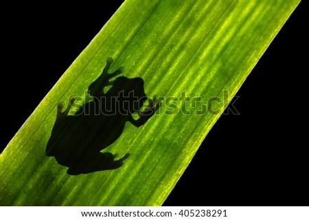 Silhouette of Toad on Leaf