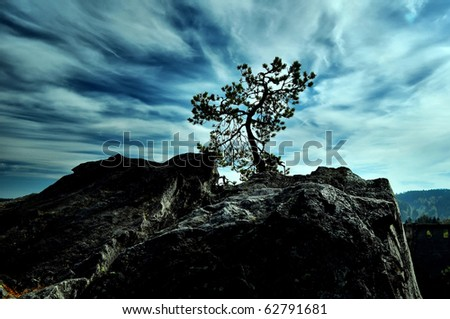 silhouette of tree - stock photo