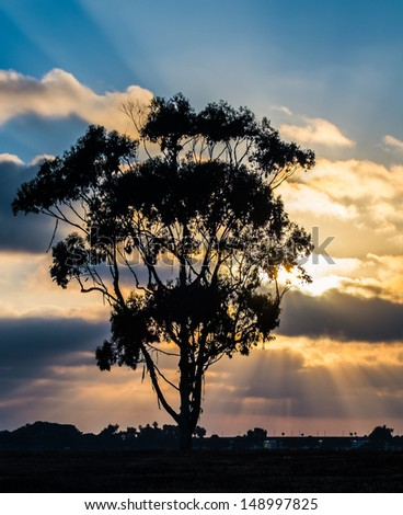 Silhouette of Tree and Sunset at Mission Bay San Diego, Southern California USA - stock photo