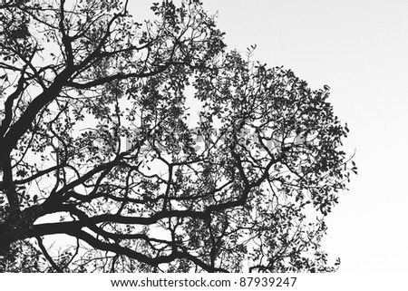 Silhouette of tree. Black and white