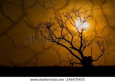 silhouette of  tree dead dry during sunset and dry soil ,season and global warming concept