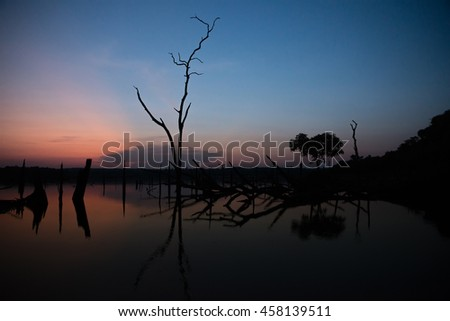 Silhouette of tree in lake at sunset,northern of Thailand.