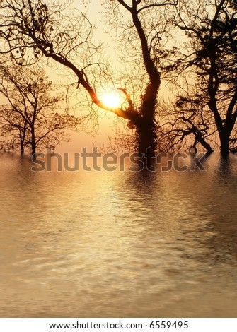 silhouette of tree in the winter at sunset and with water reflections