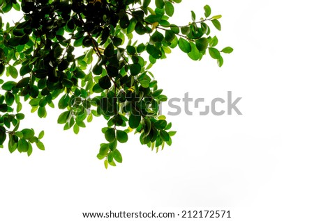 silhouette of tree leaves - stock photo