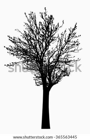 Silhouette of tree with bare branches - illustration
