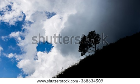 silhouette of tree with dark cloudy sky - stock photo