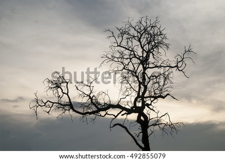 silhouette of tree with sunset sky