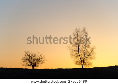 Silhouette of two barren trees at sunset, Stowe, VT, USA. - stock photo