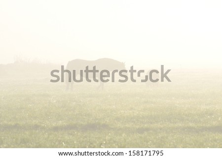 Silhouette of two horse in a field in fog - stock photo
