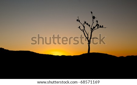 Silhouette of vultures on sunset in tree in Africa
