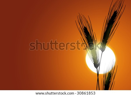 Silhouette of wheat on a sundown background - stock photo