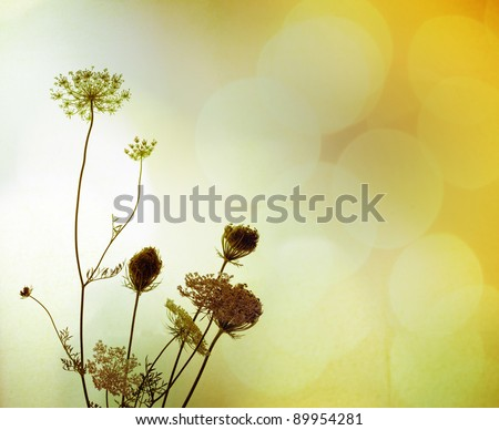Silhouette of wild flowers against blurry background full of light, with a faint texture.  Plant's name is bird's nest, or Bishop's Lace (UK), Queen Anne's Lace in the USA. Latin: daucus carota. - stock photo