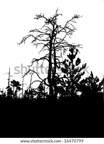 silhouette old tree isolated on white background - stock photo