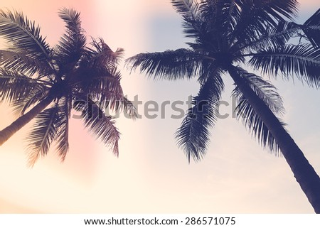 Silhouette palm tree with sun flare - vintage filter effect - stock photo