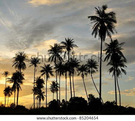 Silhouette palm trees at sunset - stock photo