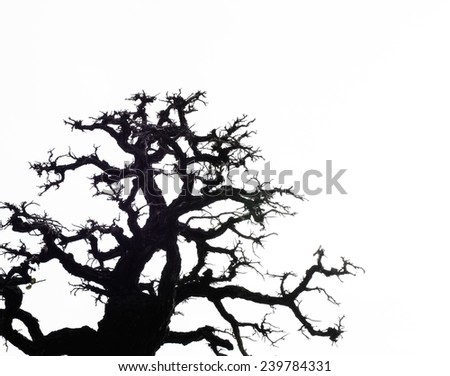 Silhouette Pattern of leafless tropical tree - stock photo