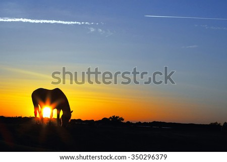 Silhouette pf a horse grazing at sunrise with a beautiful sky - stock photo