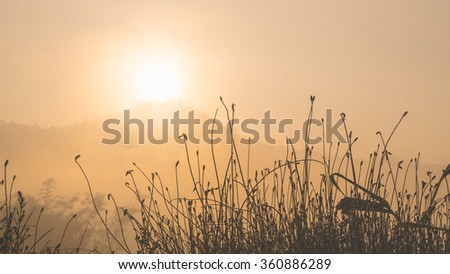 silhouette photo of grasses against the sun rising above the mountain, low contrast photo