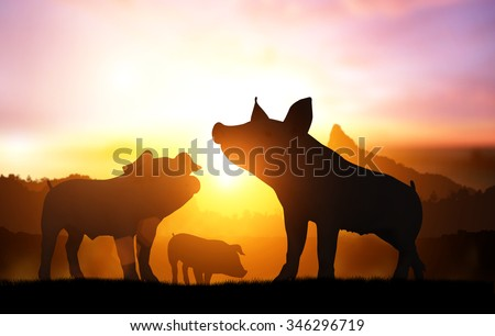 silhouette pig in sunset - stock photo