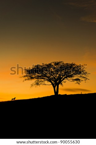 silhouette scenery of dog barking at tree standing upright in the middle of the grass field during sunset - stock photo