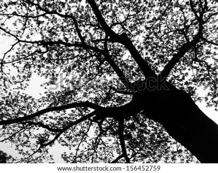 Silhouette tree - stock photo