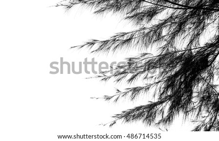 Silhouette tree and leaf isolated on white background. summer landscape.