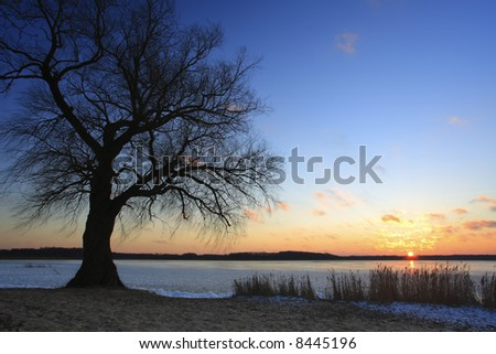 Silhouette tree and Sun - stock photo