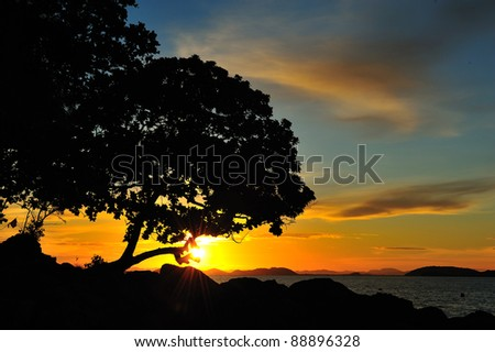 Silhouette tree and sunset - stock photo