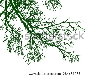 silhouette tree branches isolated on the white background - stock photo
