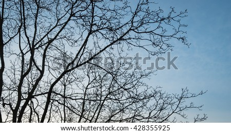 Silhouette tree with Sky