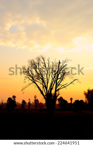 Silhouette trees longer life. Death at sunset