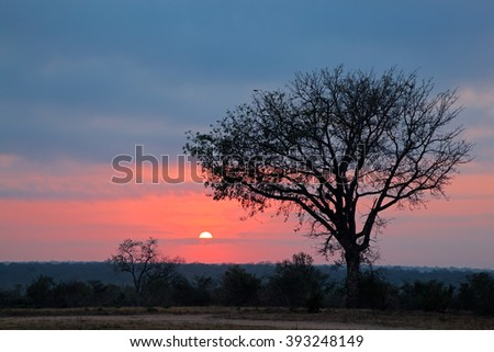 Silhouetted African savanna tree at sunrise, South Africa