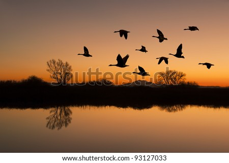 Silhouetted Canadian Geese flying at sundown over quiet Winter pond on wildlife refuge, San Joaquin Valley, California - stock photo
