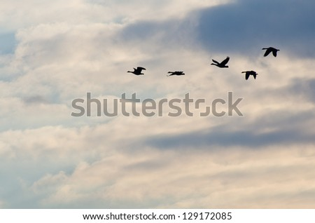 Silhouetted Geese Flying in a Beautiful Sky - stock photo