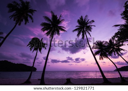 Silhouetted of coconut tree during sunrise - stock photo