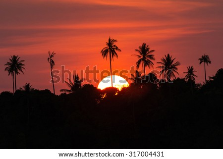 Silhouetted of coconut tree during sunrise time - stock photo