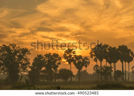 Silhouetted of coconut tree during sunset. Copy space