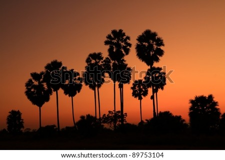 Silhouetted palm tree with sunset background