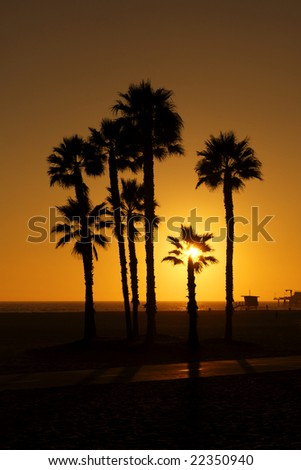 Silhouetted Palms - stock photo