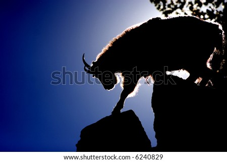 Silhouetted Shaggy Mountain Goat