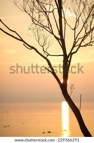 silhouetted tree in sunset at lake constance