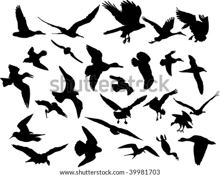 Silhouettes birds on white - stock photo